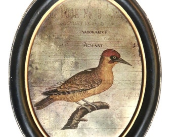 Bird Picture in Oval Frame, Reverse Painted Foil-Backed Media Picture, Black Oval Wood Frame, French Art Deco