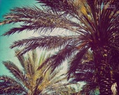 Clearance Sale - Beach photography, fine art photograph, retro art, palm tree, tropical decor, nature print - Summer Living