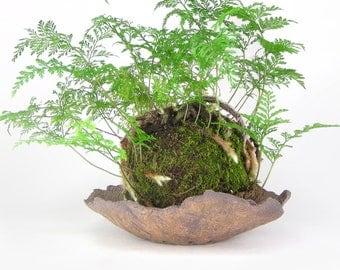 Khaki Bark Planter, Tan Kusamono Pot, Eggshell Bonsai Pot, Succulent Planter, Shallow Plant Pot, Kokedama Dish, Bonsai Accent Pot 12-16-22