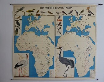 Original Vintage School Chart  - Bird Migration - Europe - Africa - Large Vintage German School Map 1950s