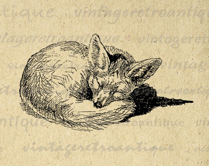 Printable Fox Art Fox Digital Image Cute Animal Sleeping Fox Graphic Download Animal Digital Vintage Clip Art Jpg Png Eps HQ 300dpi No.1089