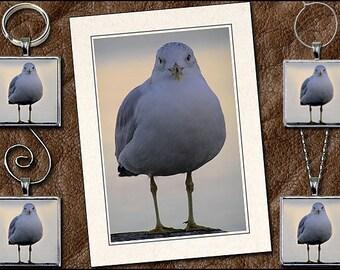 Seagull Photo Note Card Set - Seagull Pendant, Seagull Keyring, Seagull Ornament, Seagull Wine Charm - Seagull Greeting Card Handmade (GP31)