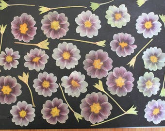 20 Dried and pressed primroses petal, craft, gift cards,wedding