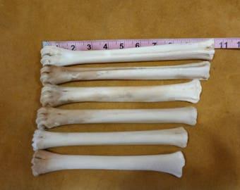 whitetail deer leg bones