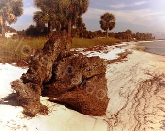 Seashore Photography // Washed up Tree Stump // Beachscape // Beach Photography