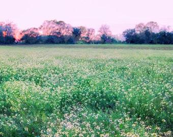 Digital Backdrop Flower Field