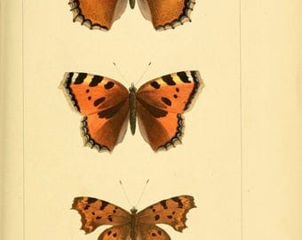 Butterflies and moths antique 1837 80 printable high quality jpegs