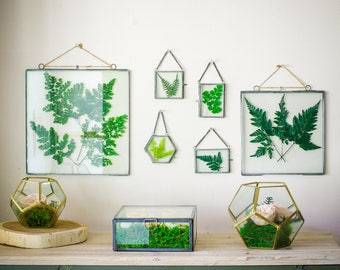 Glass botanical ferns frame, Preserved leaves, clear glass frames, hanging glass frames, real ferns, botanical specimen, natural decor,