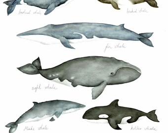 Whales II, collection of whales , nautical, underwater animal, print