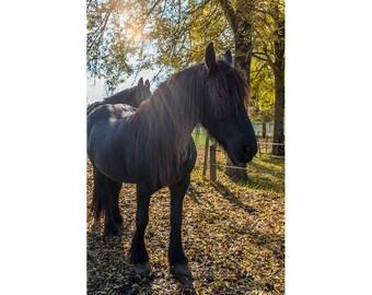 Farmhouse Decor, Horse Decor Art, Farm Animal Print, Black Horse Wall Art, Rustic Farm Animal Photo, Horse Lover Gifts, Horse Wall Art Large
