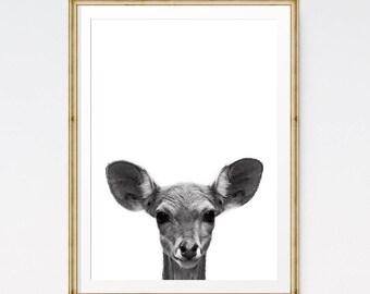 Baby deer nursery, Deer print, Woodland animal, Wildlife prints, Nursery decor, Digital download, Forest animals, Large prints