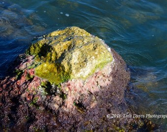 Rock Algae Greeting Card