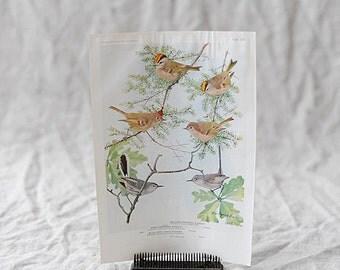 Bird Print Nº 103 | Birds of America