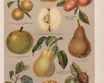 Antique Fruit Lithograph, Apples, Pears, Fruit, Fruits, Fruit Print, Fruit Lithograph, Fruit Plate, Apple Print, Pear Print, Pear Lithograph