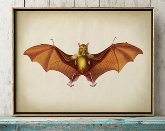 Aged bat print, bat poster, bat print, bat illustration, nocturnal animal