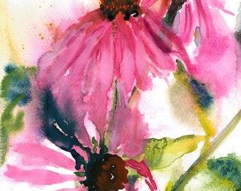 Echinacea/Purple Cone Flower