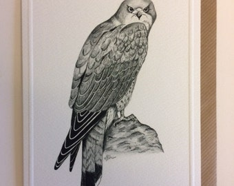 Kestrel card