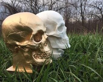 Skull decorative (mannequin)
