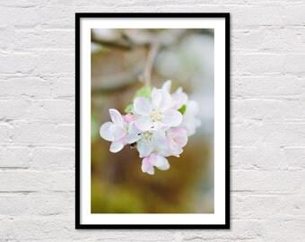 Spring Printable Art, Apple Blossoms, Spring Decor, Printable Wall Art, White Flowers, Floral Photography, Botanical Print, Digital Download