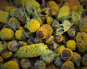 Dried Toothache Cress - Certified Organic, Spilanthes, Acmella Oleracea, Szechuan Buttons, Buzz Buttons, Dried Flowers, Medicinal, Edible