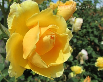 Flower Photograph - Yellow Rose - Instant Download