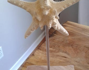 Knobby Starfish Mounted on Hand Chiseled Reclaimed Wood
