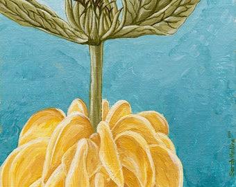 Jerusalem Sage 5 x 7 giclee print-Acrylic painting-acrylic art-flower art-yellow flower painting-giclee print-giclee painting print