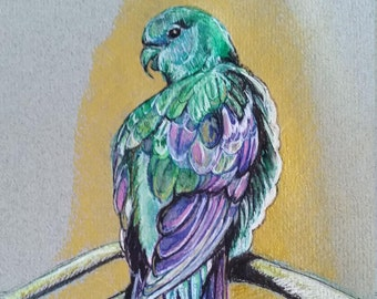 Tropical paradise parrot