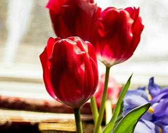 Flowers Red Tulips Canvas or Poster Wall art