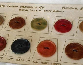 Lot of VINTAGE Pressed Dyed Sew Thru Design Vegetable Ivory Salesman Sample Card BUTTONS