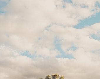 Joshua Tree photography, Southwestern decor, desert wall art, California prints, desert sky photo, minimalist print, Coachella art