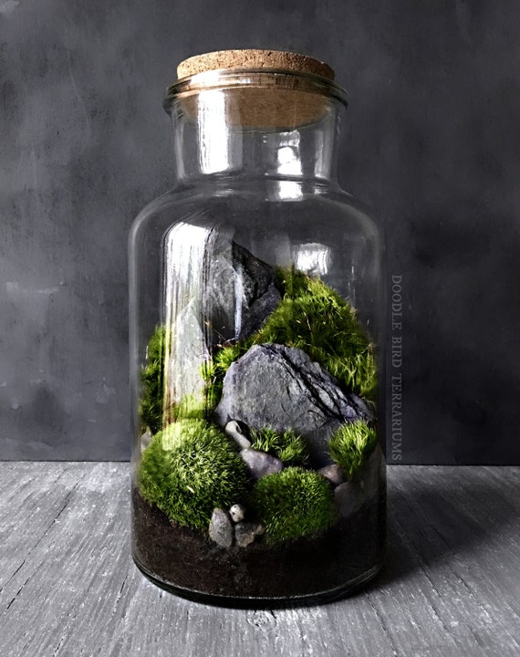 woodland mousse et foug re terrarium en grand bocal de verre. Black Bedroom Furniture Sets. Home Design Ideas