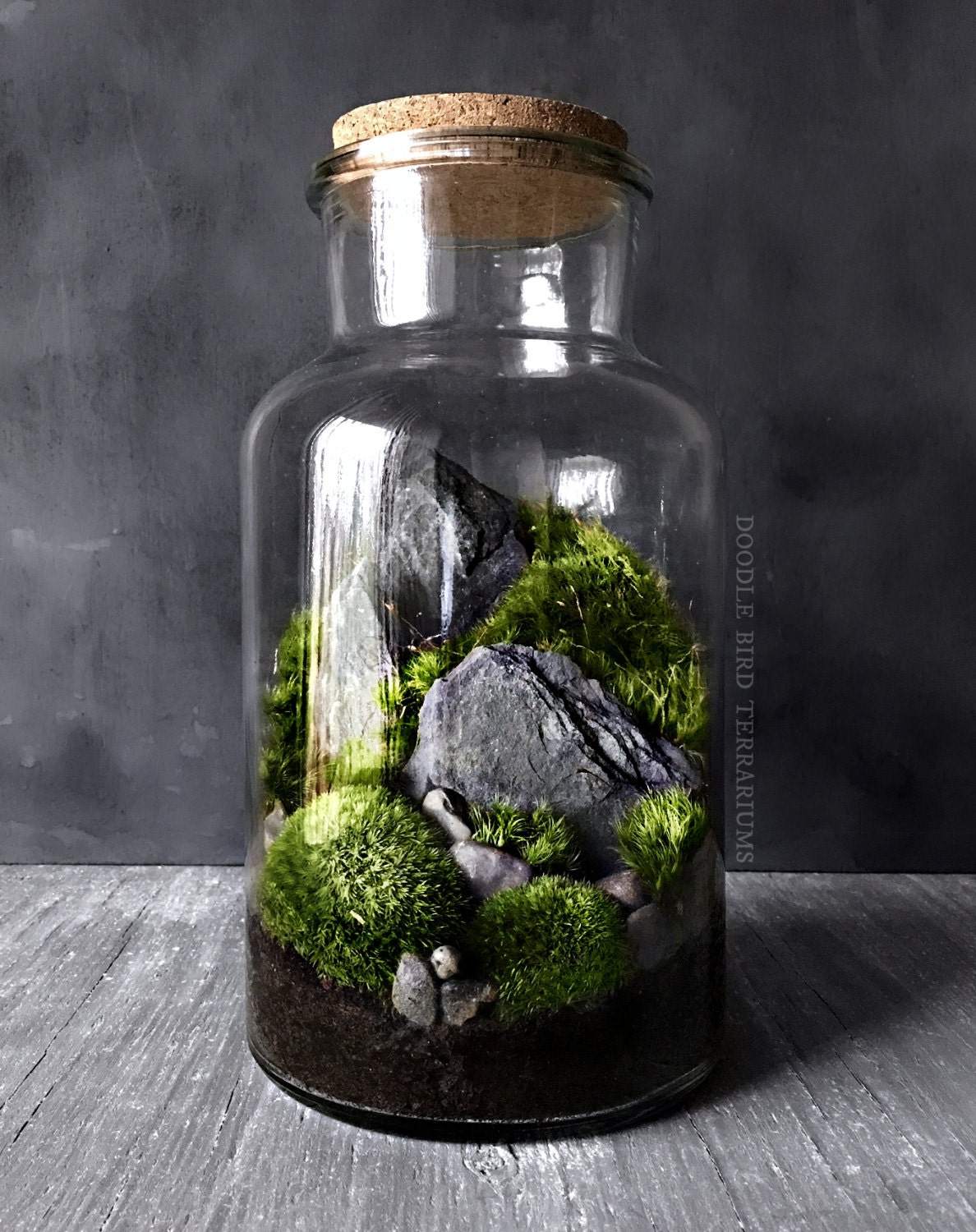 Woodland moss and fern terrarium in large glass jar - Water garden containers for sale ...