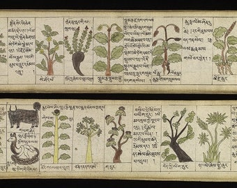 Substances for Teaching of Four (Medical) Tantras.  Tibetan Medical Literature. Ink 18th century repro. Tibetan wall art. Asian wall art