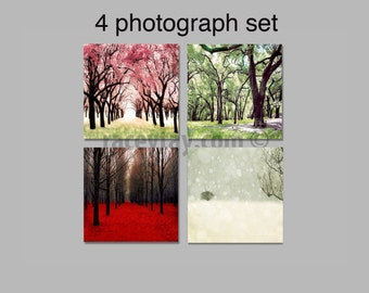 SALE, 4 Seasons Prints, Four Seasons Photos, 4 Seasons Tree Prints, Set of 4 Photos, Four Seasons Art, Save 50%