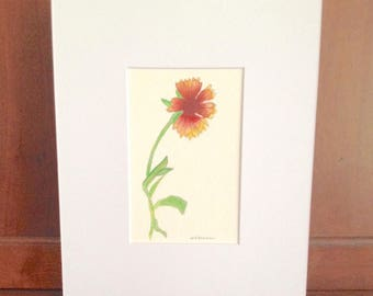 ORIGINAL watercolor painting, Indian Blanket Flower or Indian Paintbrush, Gaillardia flowers, gift for beach lover, matted 8x10 white matte
