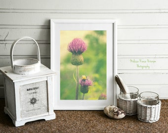 Thistle & Bee, Flower Photography, Bumble Bee, Prints, 6 x 9 + More, Nature Wall Art, Green Home Decor, Purple Thistles, Flying Insects