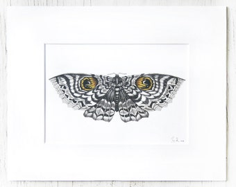 Matted Moth illustration, Print series, one of ten prints