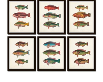 Vintage Tropical Fish Print Set No.5, Fish Prints, Giclee, Art, Prints and Posters, Coastal Art, Nautical Art,Illustration, Collage