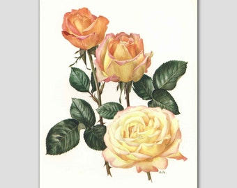 "Rose Art, Orange Office Decor, 1960s Vintage Yellow Flower Botanical Book Plate  ""Madame Meilland"" No. 13"