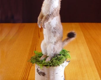 Life-size Long-Tailed Weasel Taxidermy Mount on log