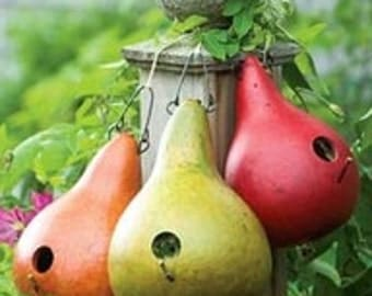 VGHB) MARTIN BIRDHOUSE Gourd~Seed!!!!~~~Extremely Prolific!~~Hardshell Variety!