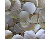 Silver Dollar Eucalyptus Confetti 6 oz - Organic Eucalyptus Leaves Wedding Favors Ideas Traditions Bride Groom Flower Pedals Sprinkle Decor