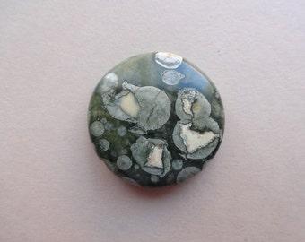 Rhyolite Jasper cabochon 24x6 mm