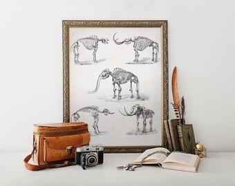 Mastodone ELEPHANT Skeleton Art Print Poster Scientific Chalkboard Antique Illustration Extinct Animal Dinosaur Wall Art 5x7 8x10 11x14