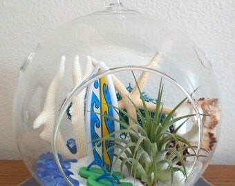 Surf's Up Large Hanging Terrarium Air Plant Terrarium Kit Beach Terrarium Beaded Hanger Birthday Gift Thank You Gift