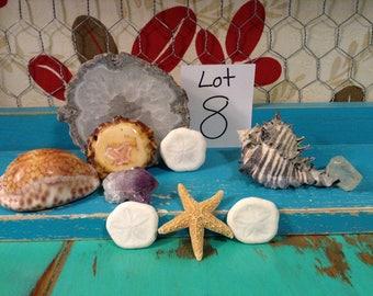 Geode, Crystals, Sea Shells, Sand Dollars, Horn, Star Fish