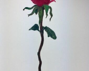 Rose forever.....100% wol
