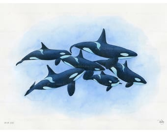 Sea Life Park Miami Orca Pod by orcinace on DeviantArt |Pod Of Orcas Drawing