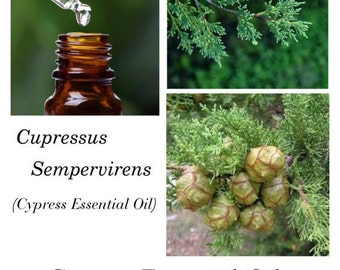 Cypress Essential Oil, Cypress Oil, Cupressus sempervirens, 100% Pure Authentic Cypress EO